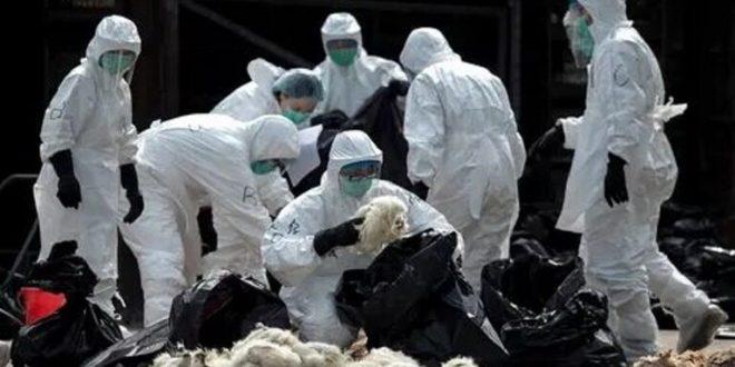 """أطباء: فيروس """"كورونا"""" الجديد ينتقل من إنسان إلى آخر"""