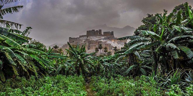 """من المعالم السياحية بالمملكة .. مزارع """"الموز"""" و""""الكادي"""" المرتفعة عن سطح البحر 1985مترًا"""